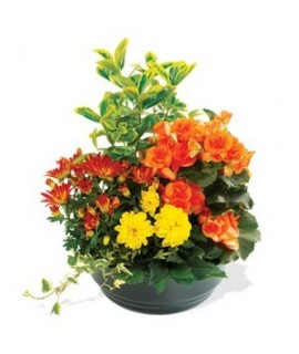 COUPE DE PLANTES D'EXTERIEUR orange