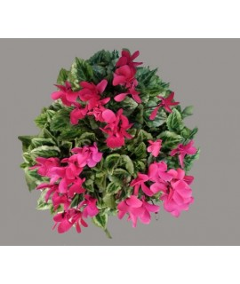 COUPE DE MINI CYCLAMEN rouge