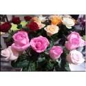 Grande Rose Variées