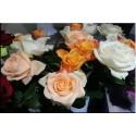 Grande Rose Variées Gros Bouton